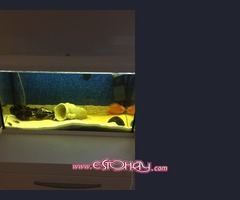 Acuario 100 litros aqualed+ peces en lanzarote