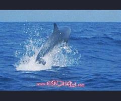 En Cerdeña (Italia) en el golfo de los delfines.