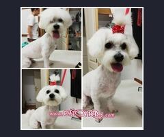 Servicios de peluquería canina