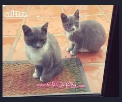 buska un sitio de amor para 2 Gatos bebe