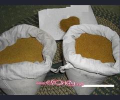 venta de 'oro polvo y lingotes en cantidad