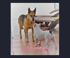 Paseadora y cuidadora Canina